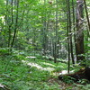 Trail along Parker Creek