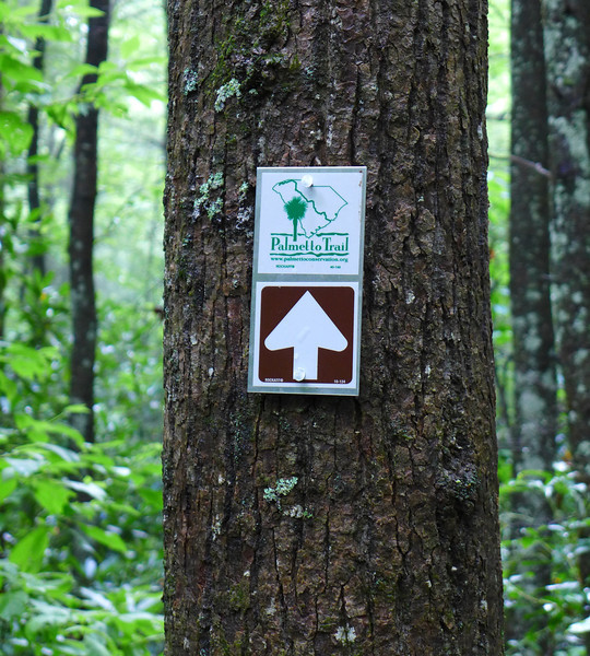 "<h1>Palmetto Trail Sign</h1>  This is the first time I've seen these signs along Jones Gap Trail.  Apparently the Palmetto Trail is going to have a ""<b><u><a href=""http://www.palmettoconservation.org/maps/MiddleSaludaWebMap.pdf"" target=""_blank"">Middle Saluda Passage</a></u></b>"" that will follow some of the trail in Jones Gap State Park.   The Palmetto Trail, when completed, will stretch across the entire state of South Carolina, from the coastal waterways around Charleston to the northern mountains of Oconee County."