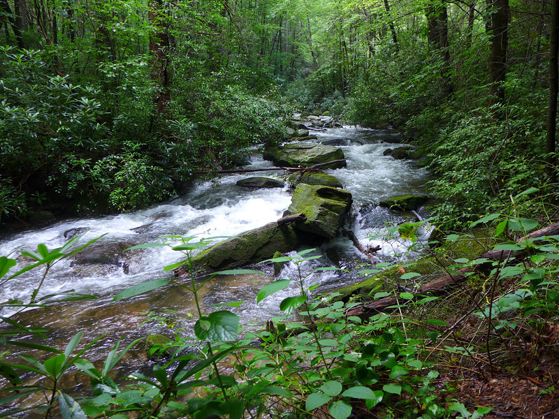 <h1>Middle Saluda</h1> ... as seen from the portion of Jones Gap Trail between the Coldspring Branch Trail and the turn off to Jones Gap Waterfall.