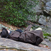 <h1>Bob</h1>...patiently waiting on the group of photographers at Laurel Fork Falls.