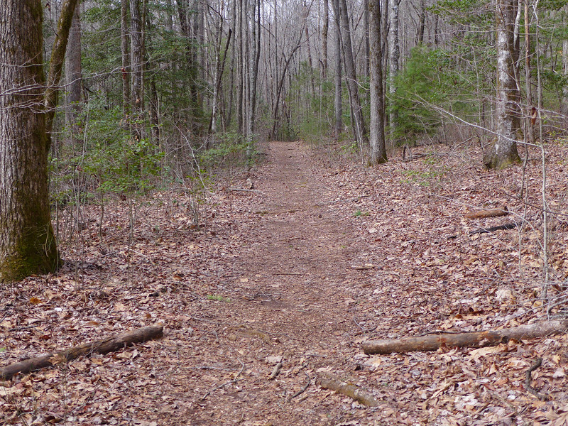 Trail to Lee Falls