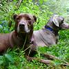 Kona and Boone