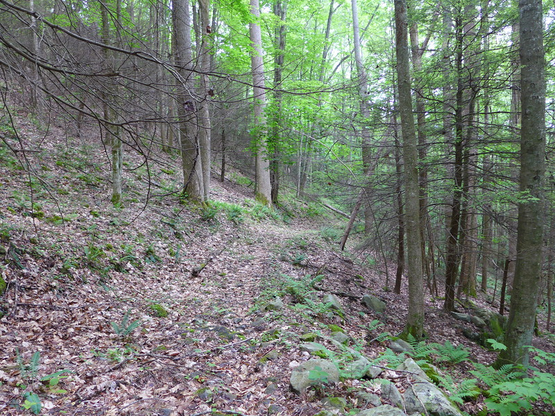The old road bed which I followed for this hike