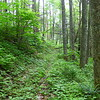 Another view of the old road bed I was hiking along