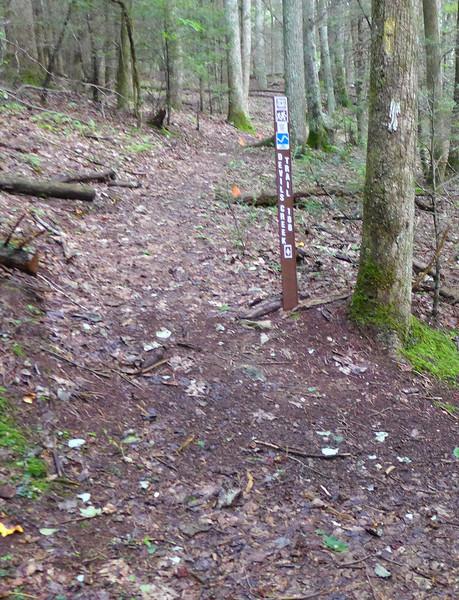 Devils Creek Trail Junction