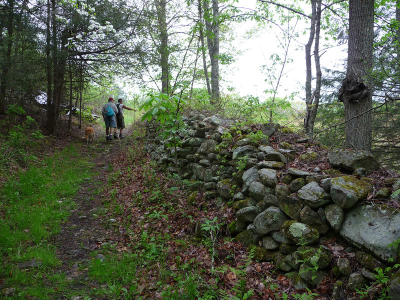 Trail along the old stone fence -- 2009