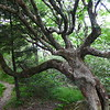 Another cool tree