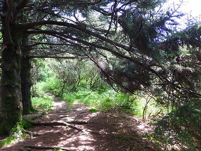 MTS Trail