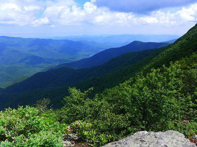 View of Asheville Watershed2