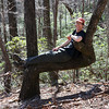 <h1>Van</h1>... stretched out on a perfectly shaped tree for trailside reclining!!    This tree is along the Mountain Bridge Passage Trail.  Photo by Andy.