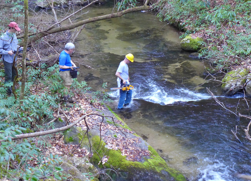 Instead of a camera, Darrin came down to the creek with a chainsaw to remove a large downfall that was lying right in front of the cascade.