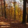 Fall Color in the Mountain Bridge Wilderness area