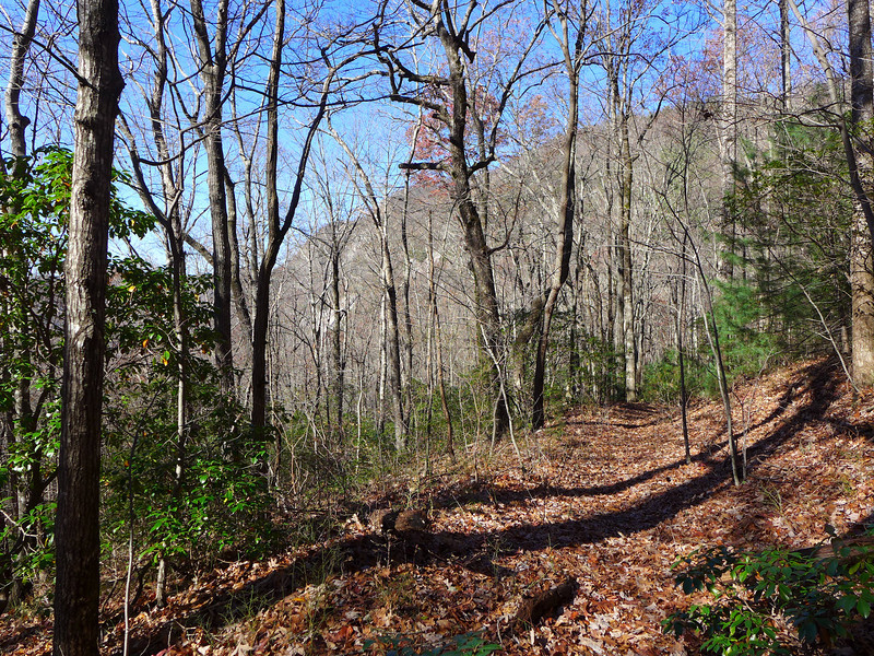 <h1>Naturaland Trust Trail</h1>...just past the juncture with Pinnacle Pass Trail, looking west towards the rock cliffs that lie at the base of Caesar's Head.