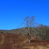 Grand old oak tree in the Meadow