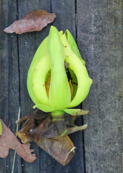 An Interesting Blossom