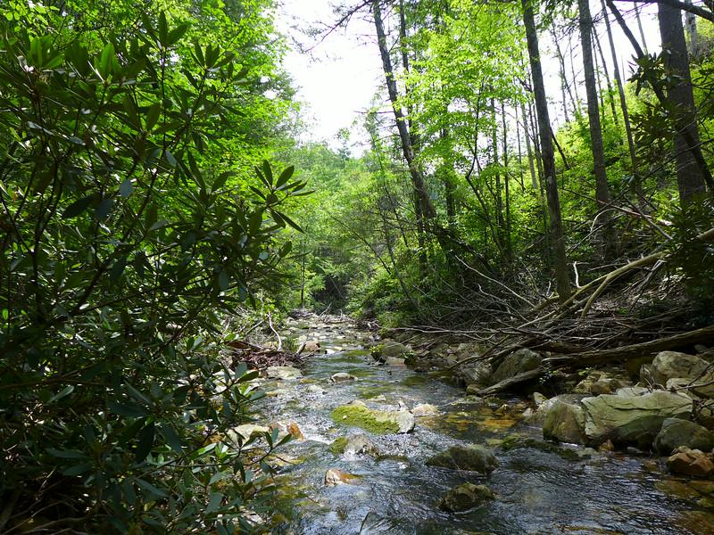 Paddy Creek