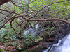 "The cascade shown in the previous photo is what's showing in the lower right-hand corner of the photo.   You can see the other ""half"" of the stream thru the rhododendrons."