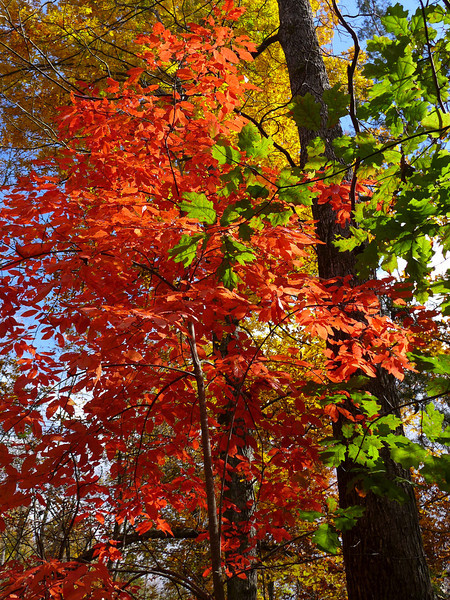 <h1>Fall Color</h1>Seen on the trail to Riley Moore Falls.