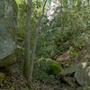 Massive field of boulders