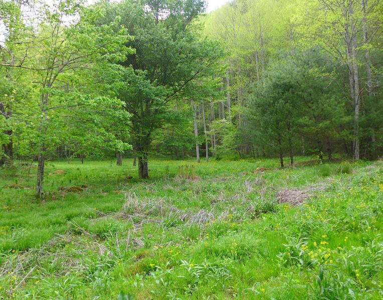 Flat bottom land along Rocky Fork Creek