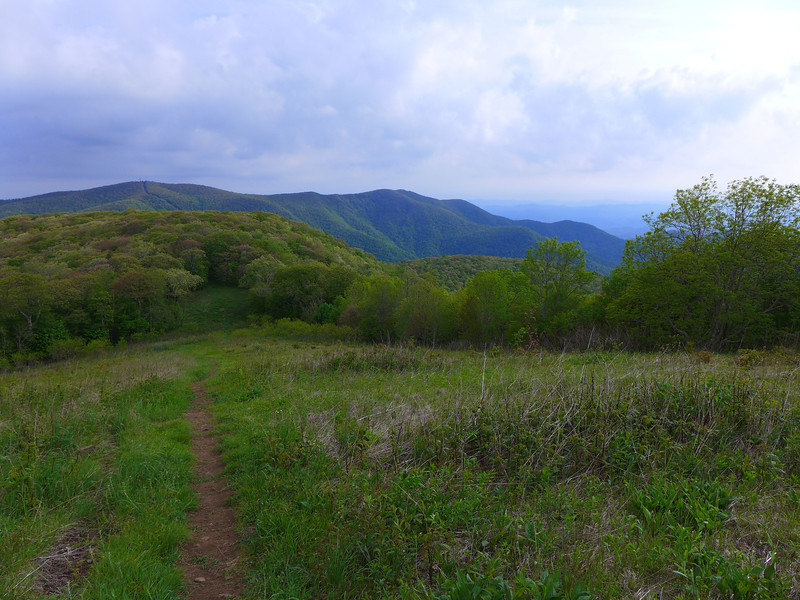 Halfway up the trail to Siler Bald