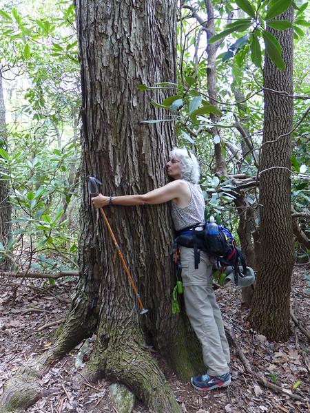 Big tree hug!!