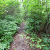 <h1>Turkey Pen Gap Trail</h1>This trail runs along the ridgeline that lies south of South Mills River.  In Pisgah National Forest, NC.