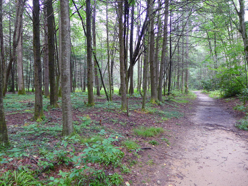 <h1>South Mills River Trail</h1>Follows the river, and is wide and flat, sandy, and often muddy if there's been a lot of rain.
