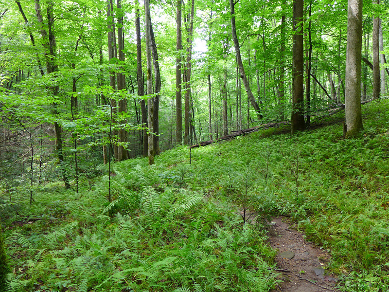 <h1>Wagon Road Trail</h1>This trail connects South Mills River with the ridge that lies south of it.   In Pisgah National Forest, NC.