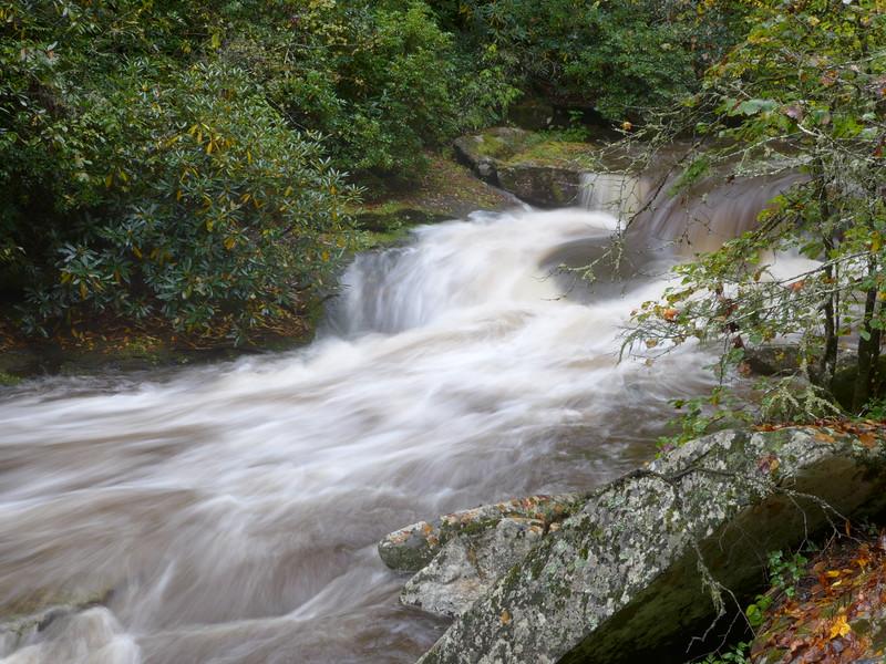 The Davidson River