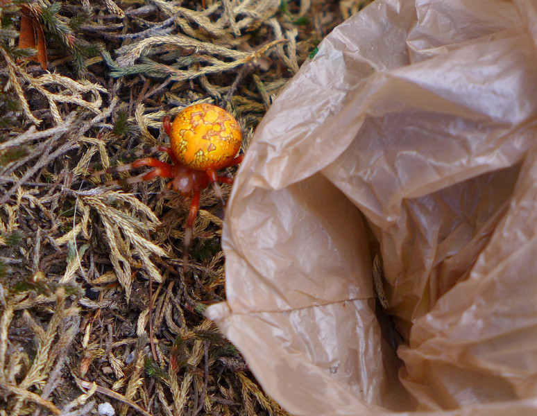 Darrin was the first to notice the spider as it emerged from his lunch bag!!