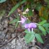 Wildflower seen roadside along US276.
