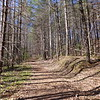 <h1>Wide Forest Road</h1>...that begins your hike to the upper falls.   This trail begins off Cleo Chapman Hwy, and is 1.25 miles, one way.