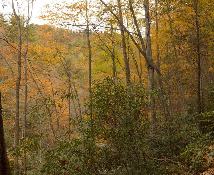 Still lots of fall color!