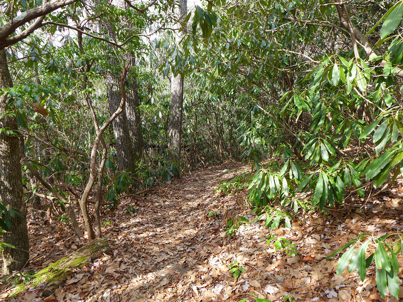 <h1>Unnamed Trail</h1>This is the lower end of the unnamed trail which connects Art Loeb with FS5361.