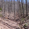 <h1>Open Forest</h1>....along our trek up the hillside, following the unnamed tributary.