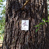 <h1>Joker</h1>Just a short distance from the tree that we found the King of Hearts, we saw this Joker.