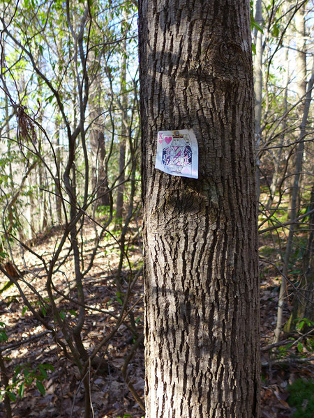 <h1>Weird things you find on hikes</h1>We found this playing card on a tree as we were making our way back to our cars.