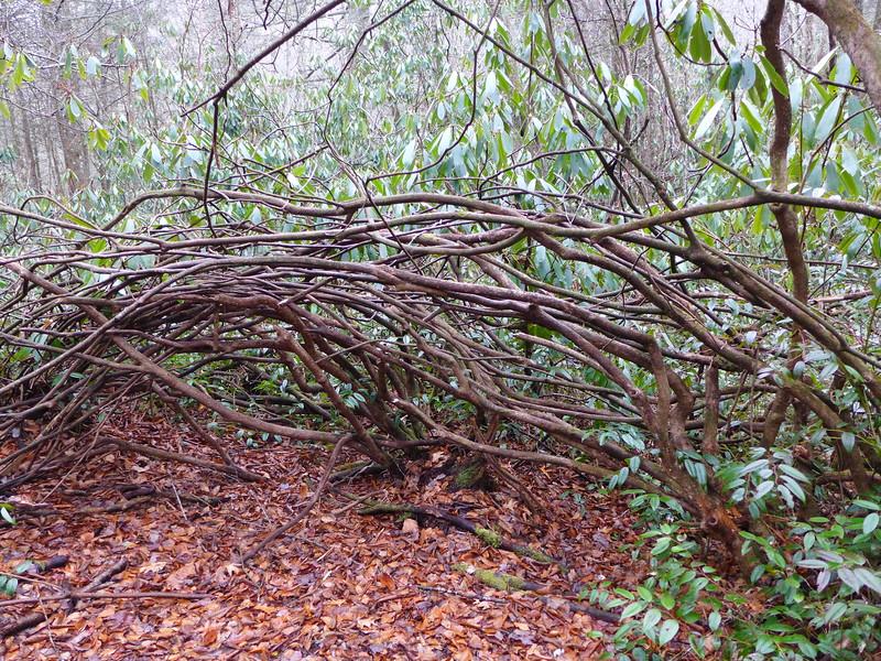 Interesting network of vines