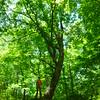 Grand, old oak tree