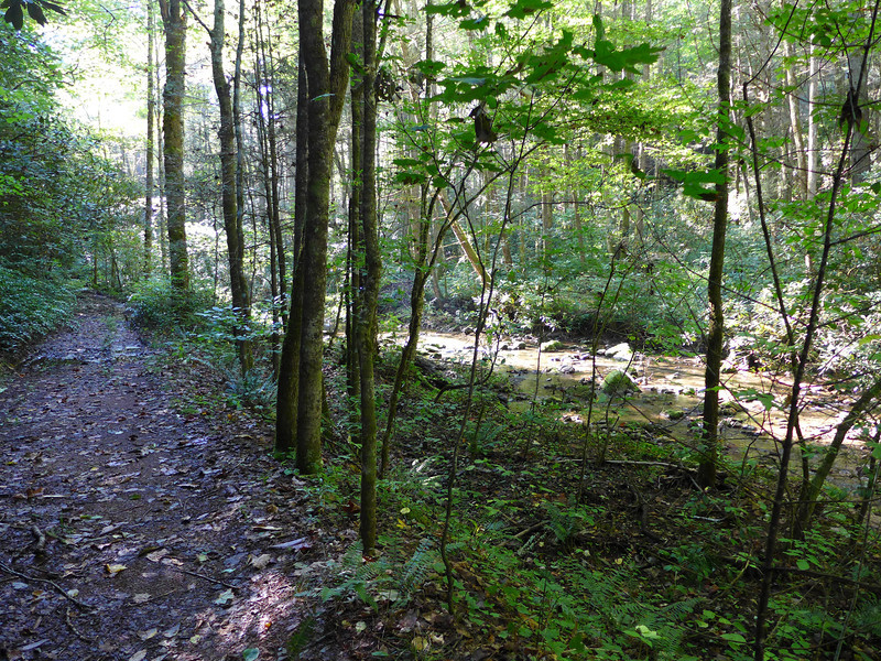 <h1>Trail and Creek</h1>Except for the last 3/4 mile, the trail to the falls parallels Wolf Creek, sometimes running immediately adjacent to the creek, as shown here, other times a hundred feet or so higher than the creek, but always within earshot of its rapids.