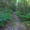 <h1>Trail to Wolf Creek Falls</h1>