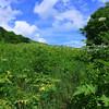 Meadow below Yellow Gap