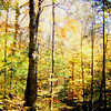 Northville-Placid Trail, near Whitehouse, oct 13, 1989.