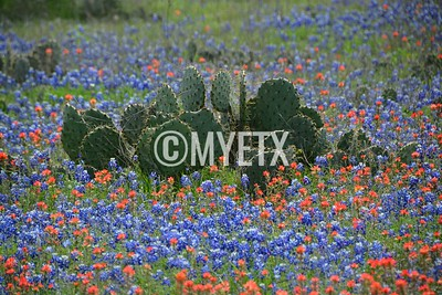 Cactus In A Sea of Blue