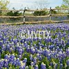 LBJ Ranch Bluebonnets