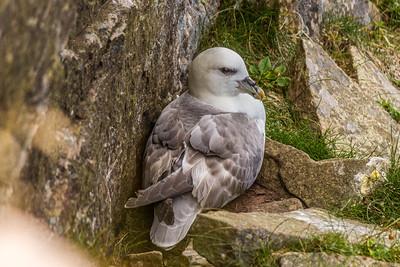 Hatching gull