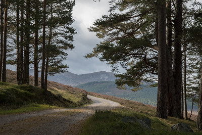 The path invites us to continue. On leaving the forest, we see the lower hills next to Lochnagar