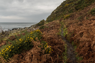 The brown mud, the orange bracken and the ever-blooming gorse
