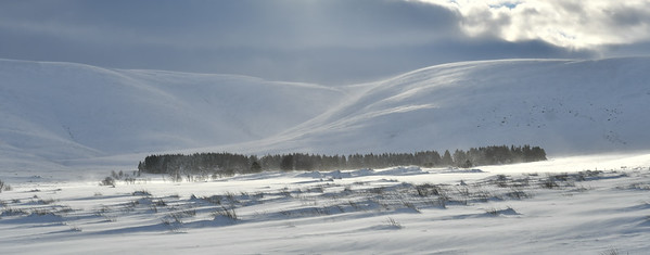 The strong wind blows snow particles around